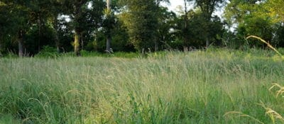 Field of weeds where slaves were buried on the former Lomo Alto Plantation directly behind an HBCU named Prairie View A&M. August, 2015. Photograph by Randy R. Potts