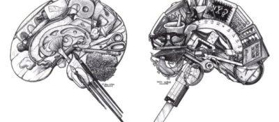 """Brain (Left)"" and ""Brain (Right),"" © Don Stewart."